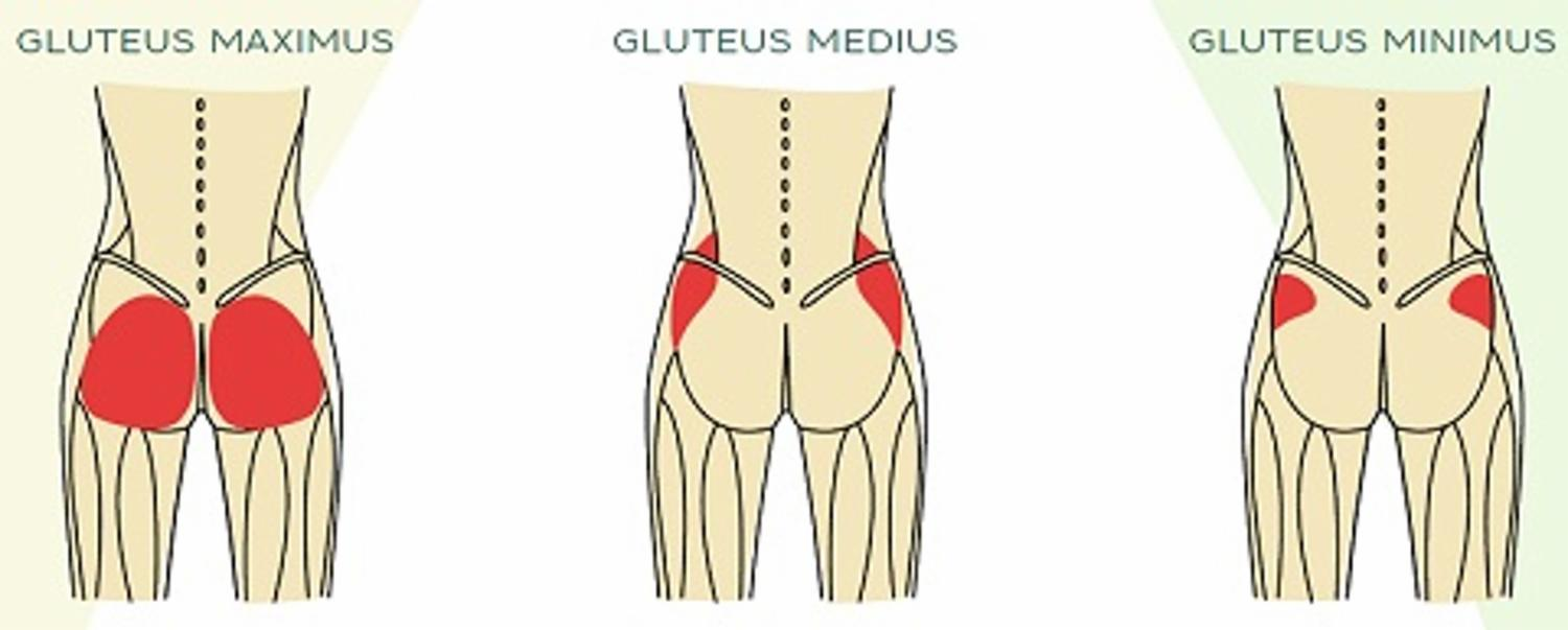 How Your Glutes Impact Your Life